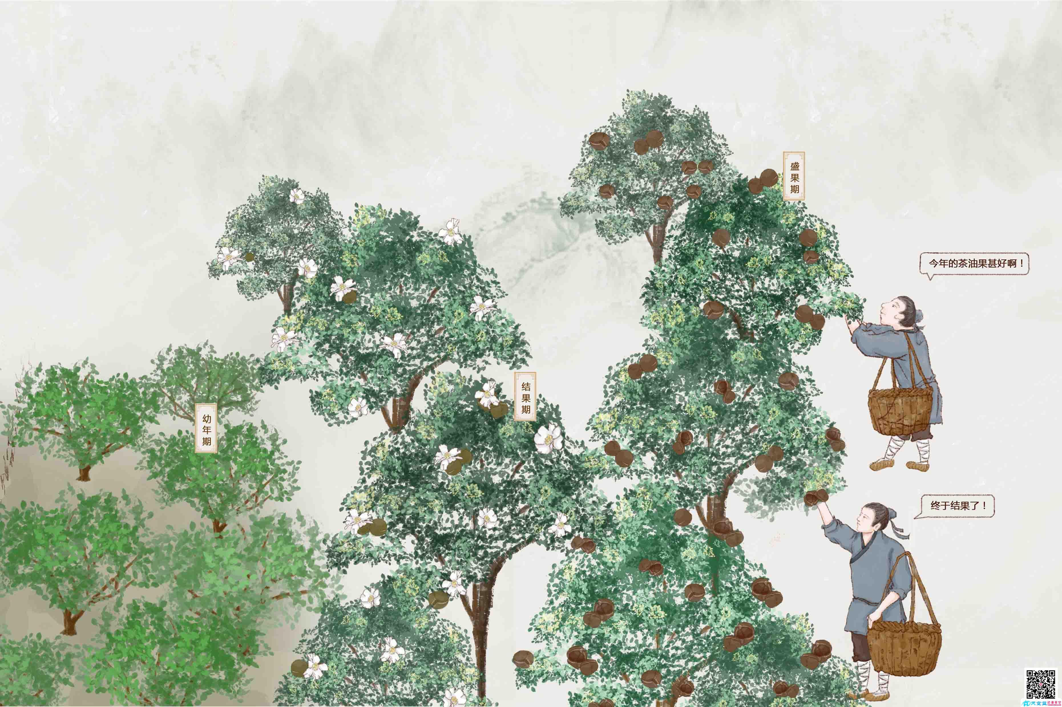 手绘动漫设计制作《一场千年山茶油的寻味之旅》