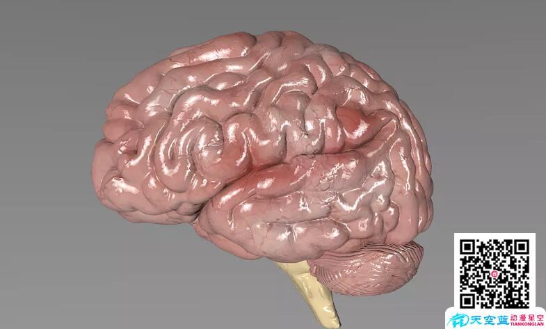 大脑脑部脑震荡开颅:手术三维动画制作、医学动画制作