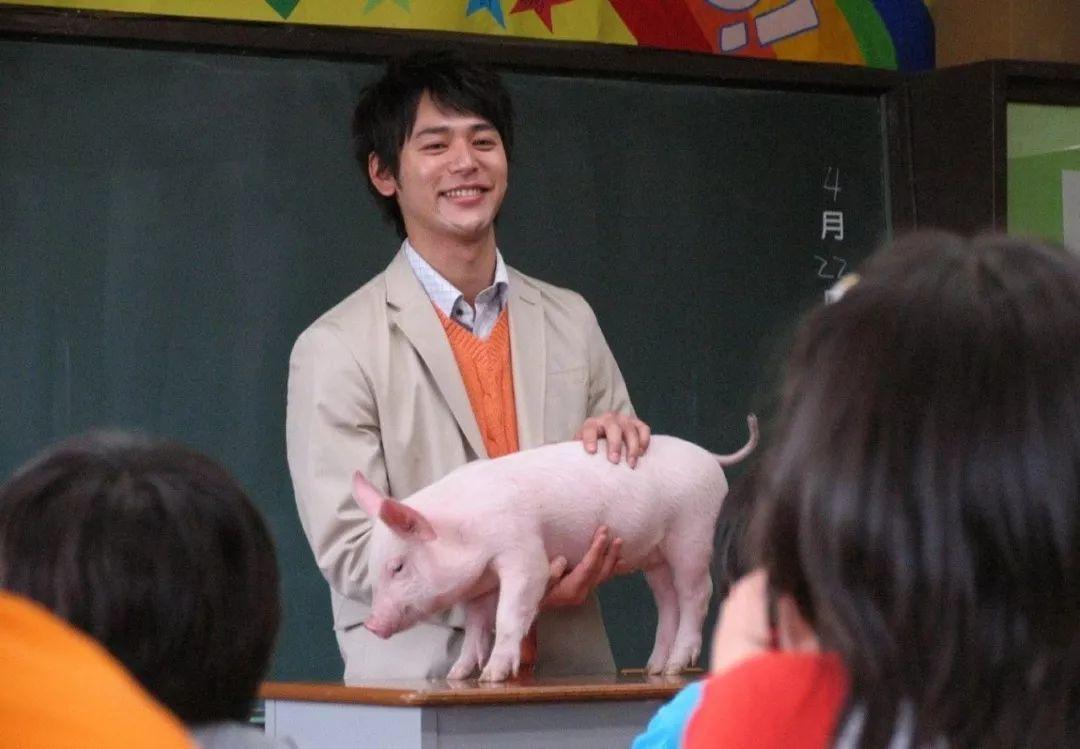 只知道啥是佩奇?别的猪不乐意了呢