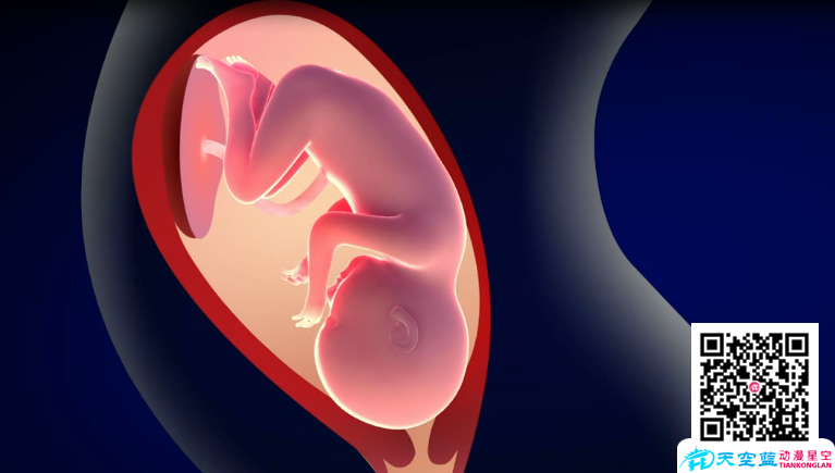 Flash医疗动画制作「宫颈机能不全流产演示」动漫宣传片
