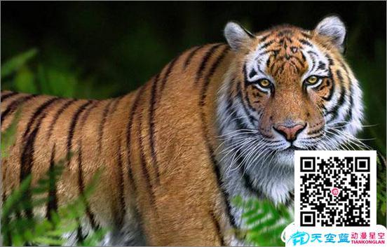 3ds Max打造勇猛的老虎