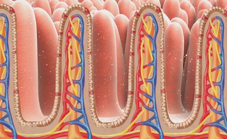 「动画制作」医疗神经元3d动画模拟制作