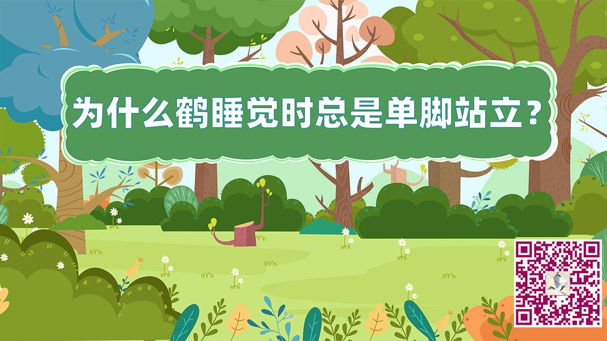 鹤单脚站立二维码jpg.jpg