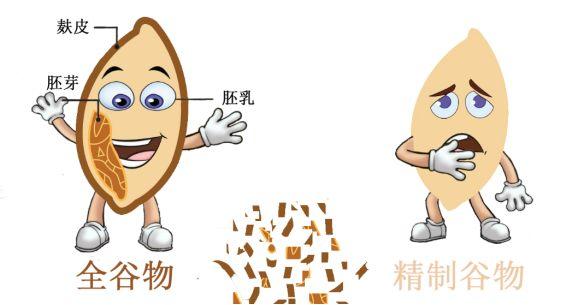 什么是全谷物,为什么说全谷物是膳食纤维的良好来源?