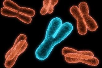 20%的男人,Y染色体正在流失:他们更易患上癌症?