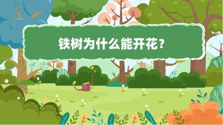 『铁树为什么能开花?』冒个炮十万个为什么动漫视界