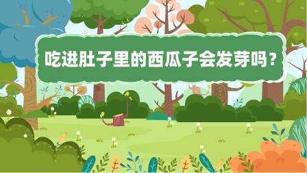 『吃(chi)進(jin)肚子里的西瓜子會發芽嗎?』冒個(ge)炮十萬個(ge)為什麼動漫視界