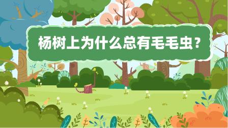 『楊樹(shu)上為什麼總有(you)毛(mao)毛(mao)蟲?』冒個(ge)炮十萬個(ge)為什麼動漫視界