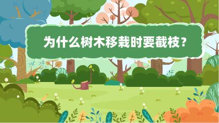 『為什麼樹(shu)木移栽時要截枝?』冒個(ge)炮十萬個(ge)為什麼動漫視界