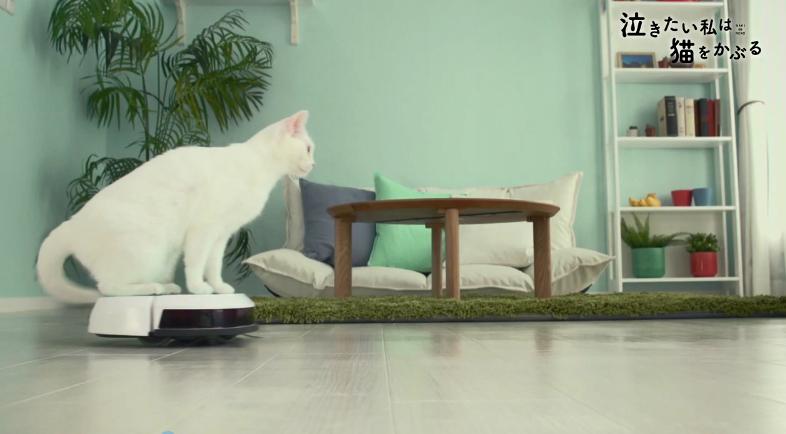 超可爱!《想哭的我戴上了猫的面具》推出真猫版宣传片