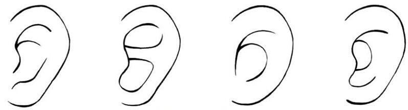 漫画中耳朵.jpg